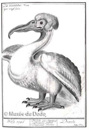 Museum du Dodo